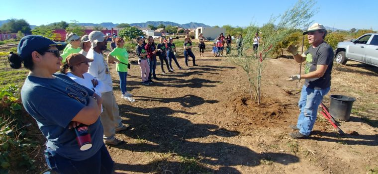 Phoenix Urban Heat Planning Activities: planting trees