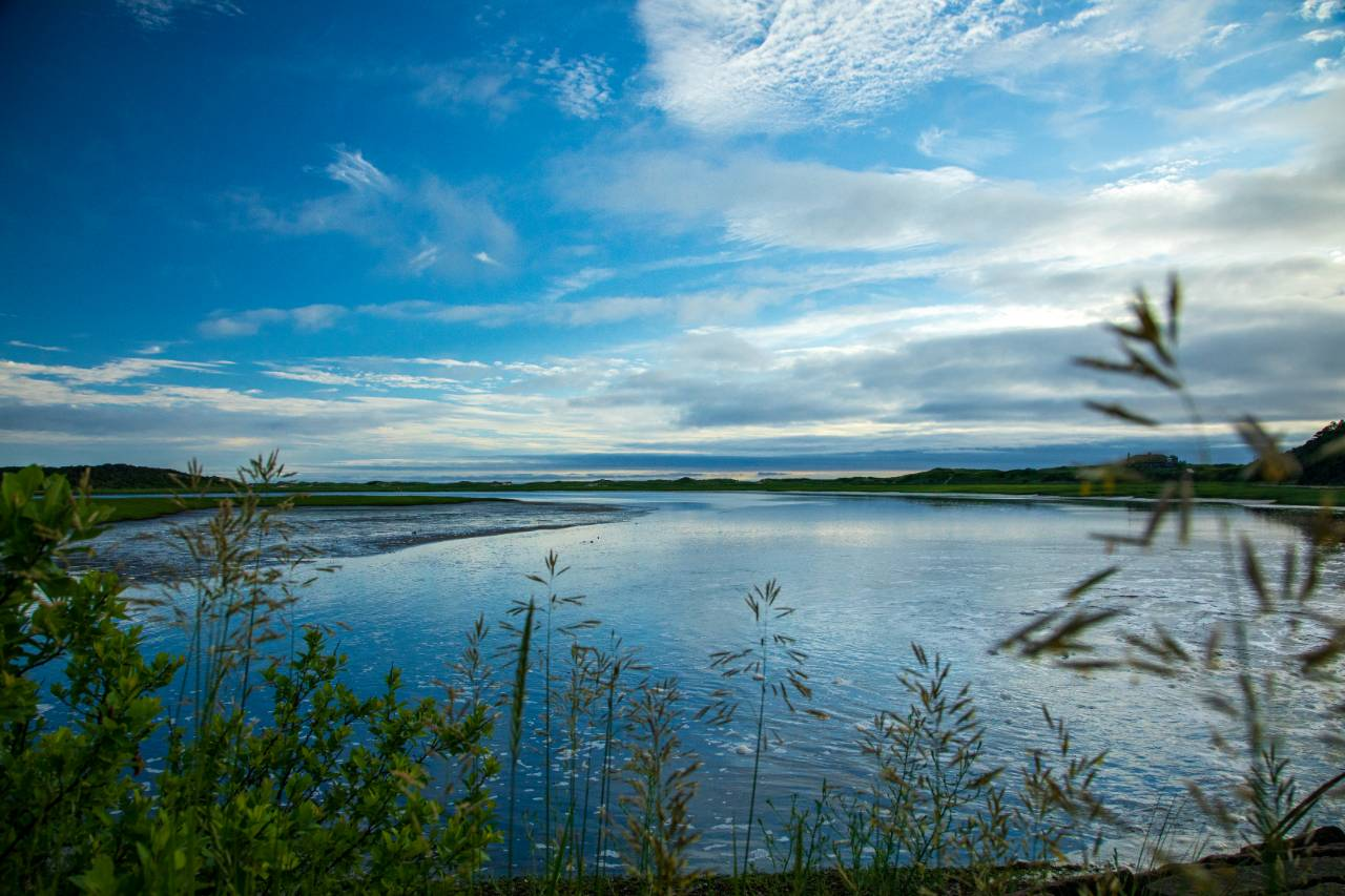 Herring River Estuary in Wellfleet, Massachusetts. Credit: Impact Media Lab / AAAS